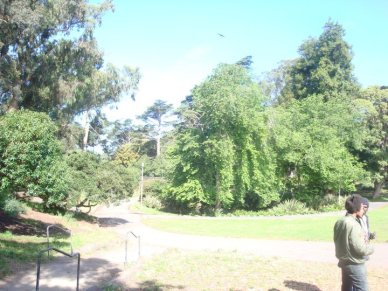 The Time I Dropped LSD in Golden Gate Park